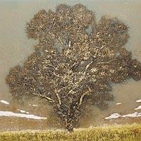 野の木(A)