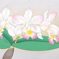 カトレア 花の瞬間より